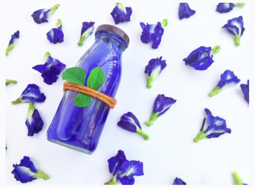 Bí quyết làm đẹp bằng hoa đậu biếc từ thiên nhiên - Ảnh 6