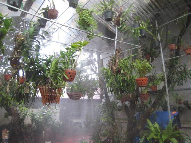 Cách trồng lan trầm vàng đơn giản mà ra hoa đẹp ngay tại nhà - Ảnh 4