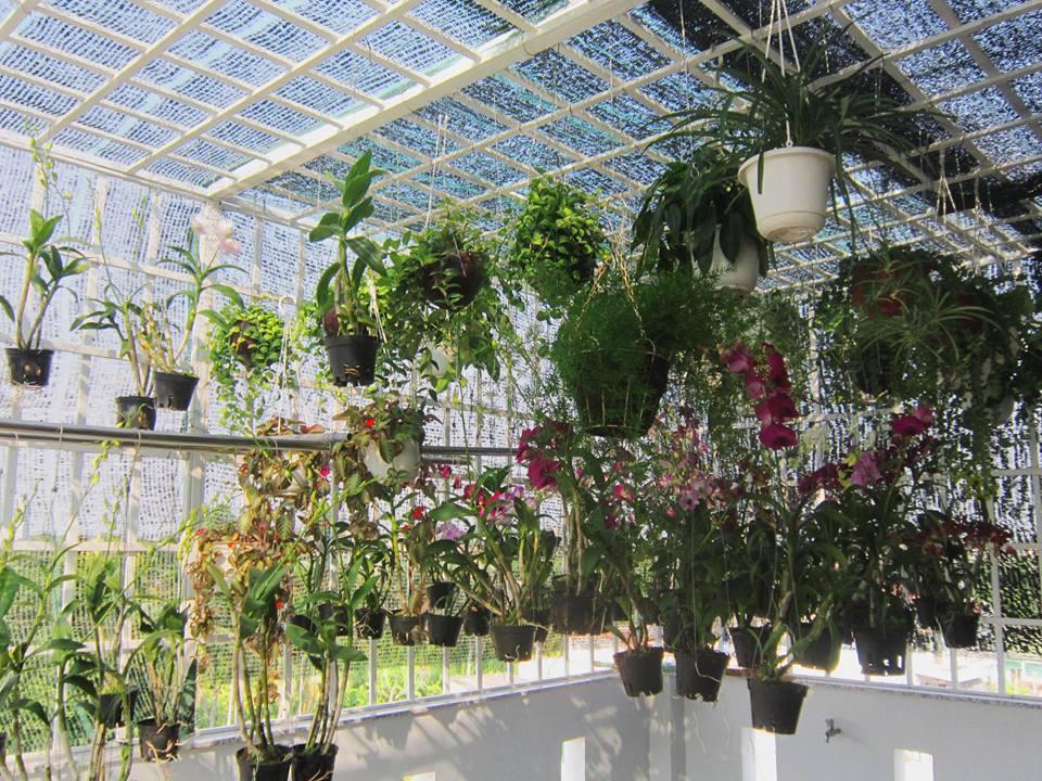 Cách trồng phong lan quế tím tô điểm cho không gian nhà bạn - Ảnh 2
