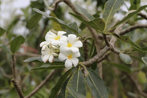 hoa su ảnh 6
