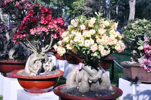 hoa su ảnh 8