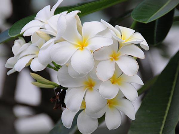 hoa su ảnh 2