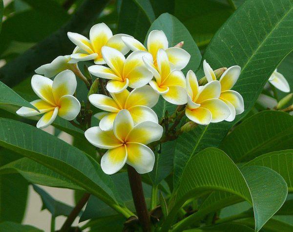 hoa su ảnh 9