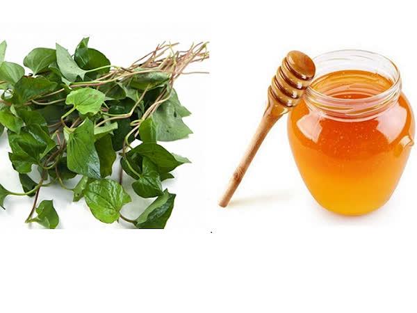 Chia sẻ cách uống rau diếp cá với mật ong chăm sóc da hiệu quả