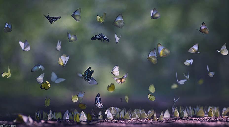 Giải mã điềm báo khi bướm đen bay quanh người  - Ảnh 2