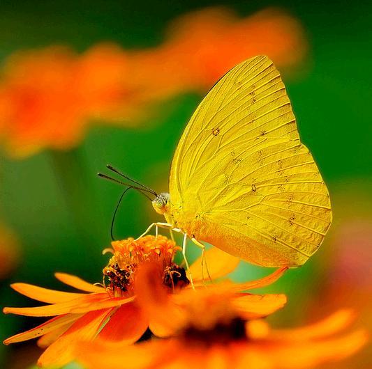 Giải mã điềm báo khi bướm đen bay quanh người  - Ảnh 7