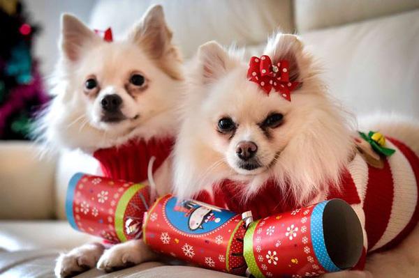 Chó là con vật nuôi trong nhà, gần gũi với con người nên rất cần được trân trọng