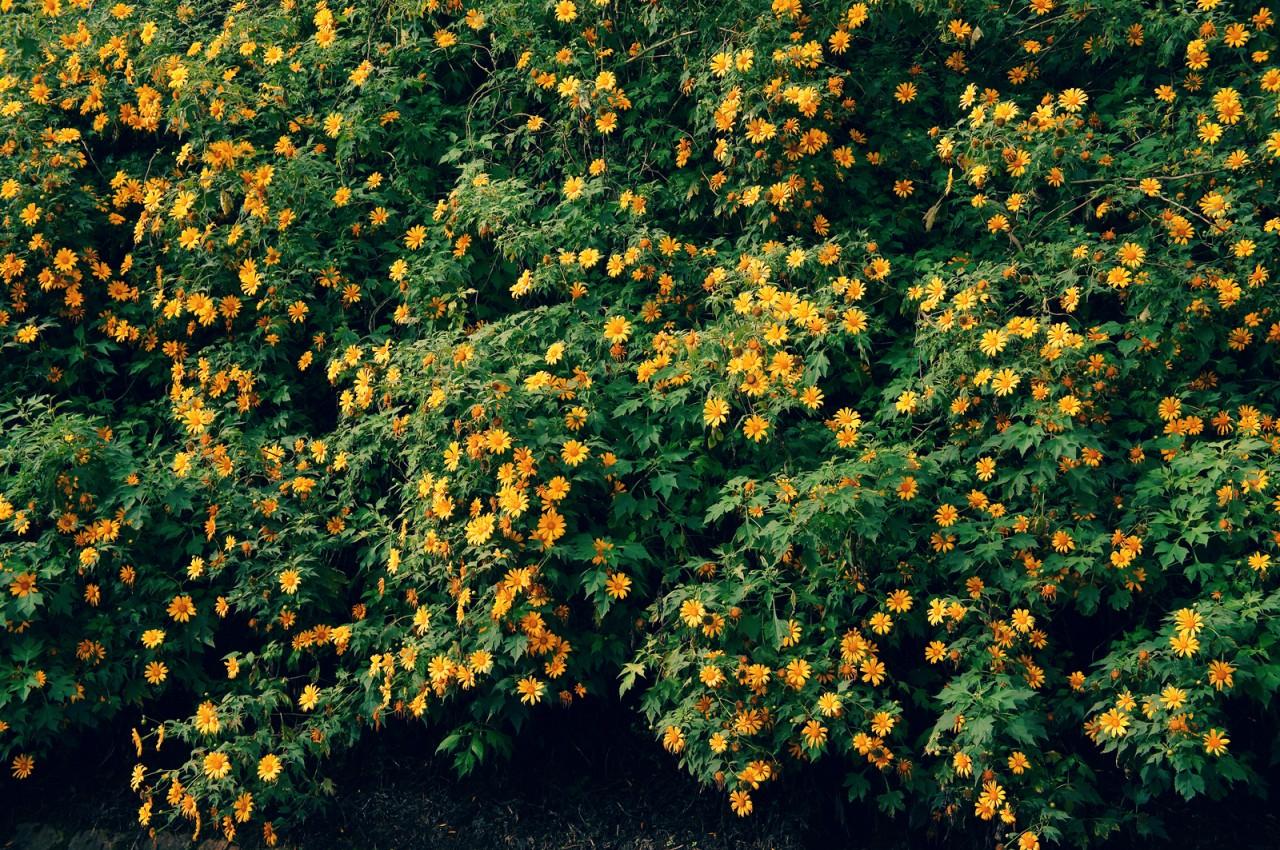 hoa da quy ảnh 5