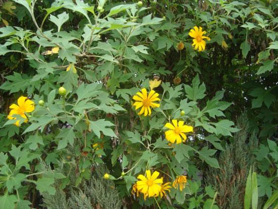 hoa da quy ảnh 8