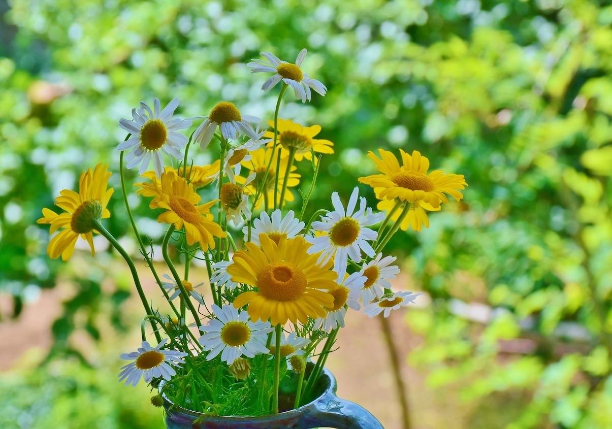 hoa da quy ảnh 6