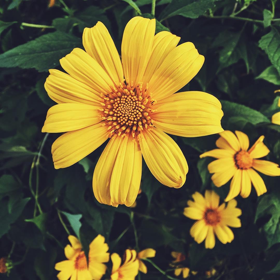 hoa da quy ảnh 1