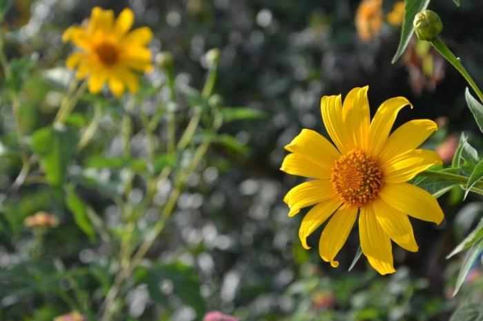 hoa da quy ảnh 4