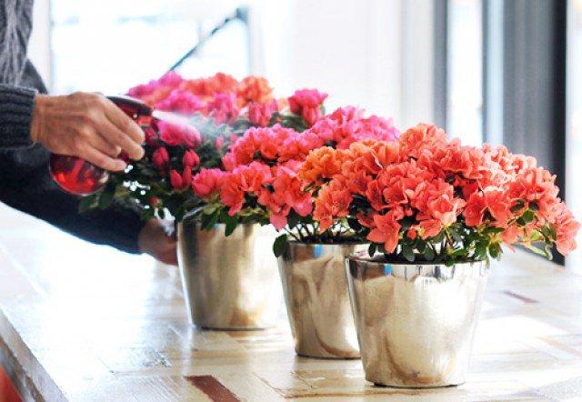 hoa do quyen ảnh 7