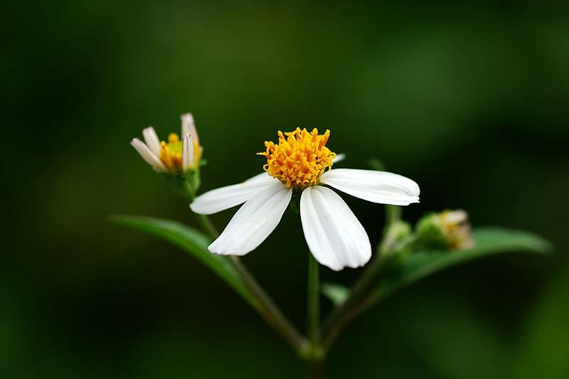 hoa xuyen chi ảnh 4
