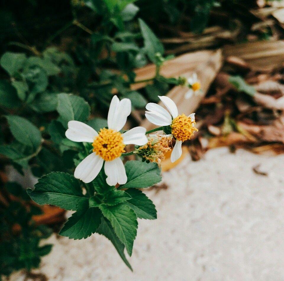 hoa xuyen chi ảnh 2