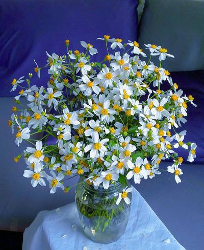 hoa xuyen chi ảnh 3
