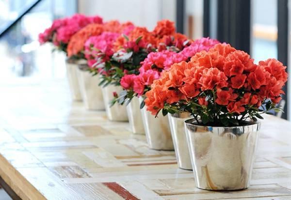 Hoa tươi mang đến nguồn sinh khí, sức sống cho không gian và còn là niềm hy vọng cho một năm mới khởi sắc