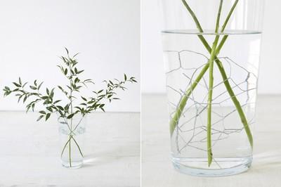 Lấy 3 cành lá nhỏ cao gấp 2,5 lần lọ hoa cắm vào bình