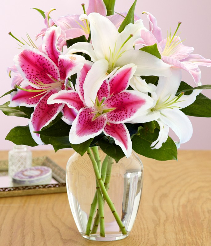 Hoa Lily là loài hoa tượng trưng cho sự ấm áp và lòng biết ơn đối với thầy cô giáo