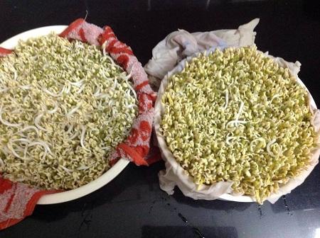 Hướng dẫn cách ủ đậu nành lên mầm nở đều và nhanh tại nhà đơn giản - Ảnh 6