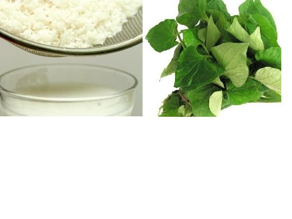 Mẹo trị ho bằng nước vo gạo và rau diếp cá - Ảnh 5