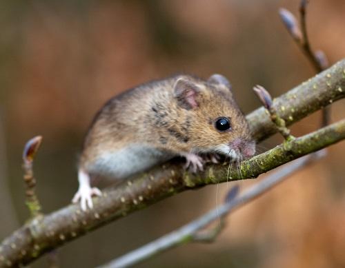 Mơ thấy chuột con là thông điệp nên cảnh giác vì sẽ dễ bị chơi xấu sau lưng