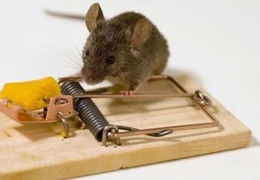 Mơ thấy mình bẫy chuột là dấu hiệu cảnh báo có một số kẻ xấu đang rắp tâm hãm hại