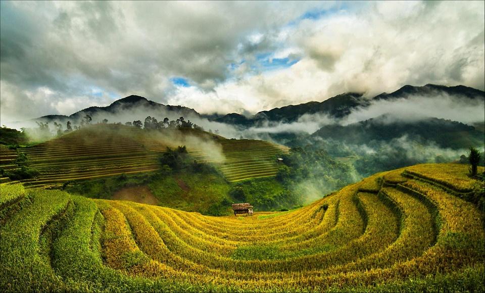 Vẻ đẹp tuyệt tác của những ruộng bậc thang đã được lúa chín nhuộm vàng khắp các rẻo cao