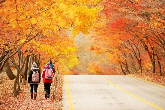 Hàn Quốc lôi cuốn khách du lịch tới nhiều trong tháng 9 đến tháng 11