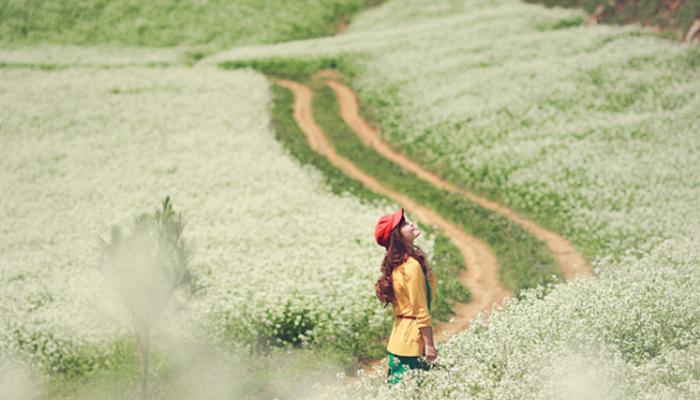 Mộc Châu mùa hoa cải trắng xứng đáng là điểm dừng chân trong tháng 10
