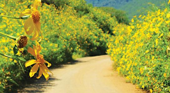 Du lịch Đà Lạt tháng 10 ngắm những con đường hoa dã quỳ đẹp đến nao lòng