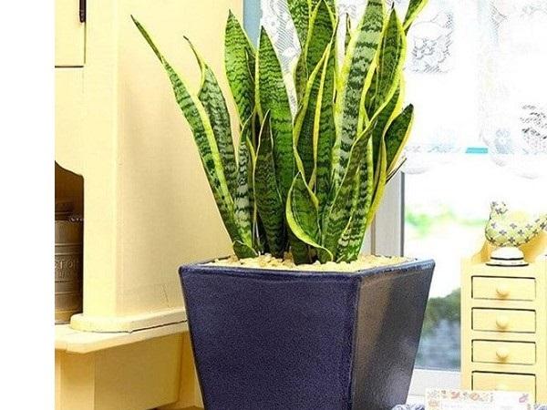 Tổng hợp các loại cây trồng thanh lọc không khí trong nhà giúp sức khỏe tốt