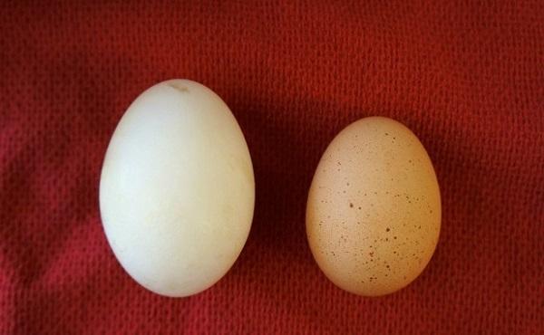 Trứng ngỗng có tác dụng gì đối với sức khỏe mẹ bầu - Ảnh 5