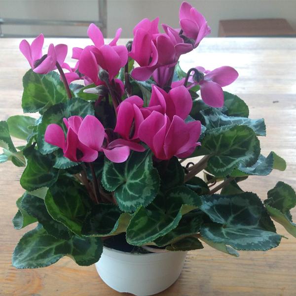 hoa anh thao ảnh 2