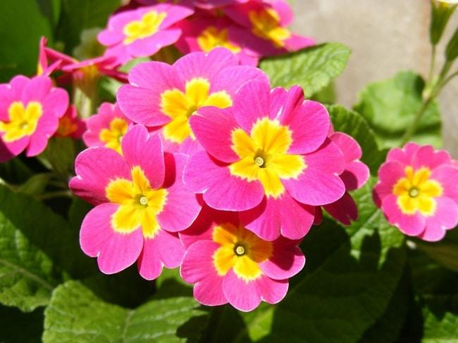 hoa anh thao ảnh 4