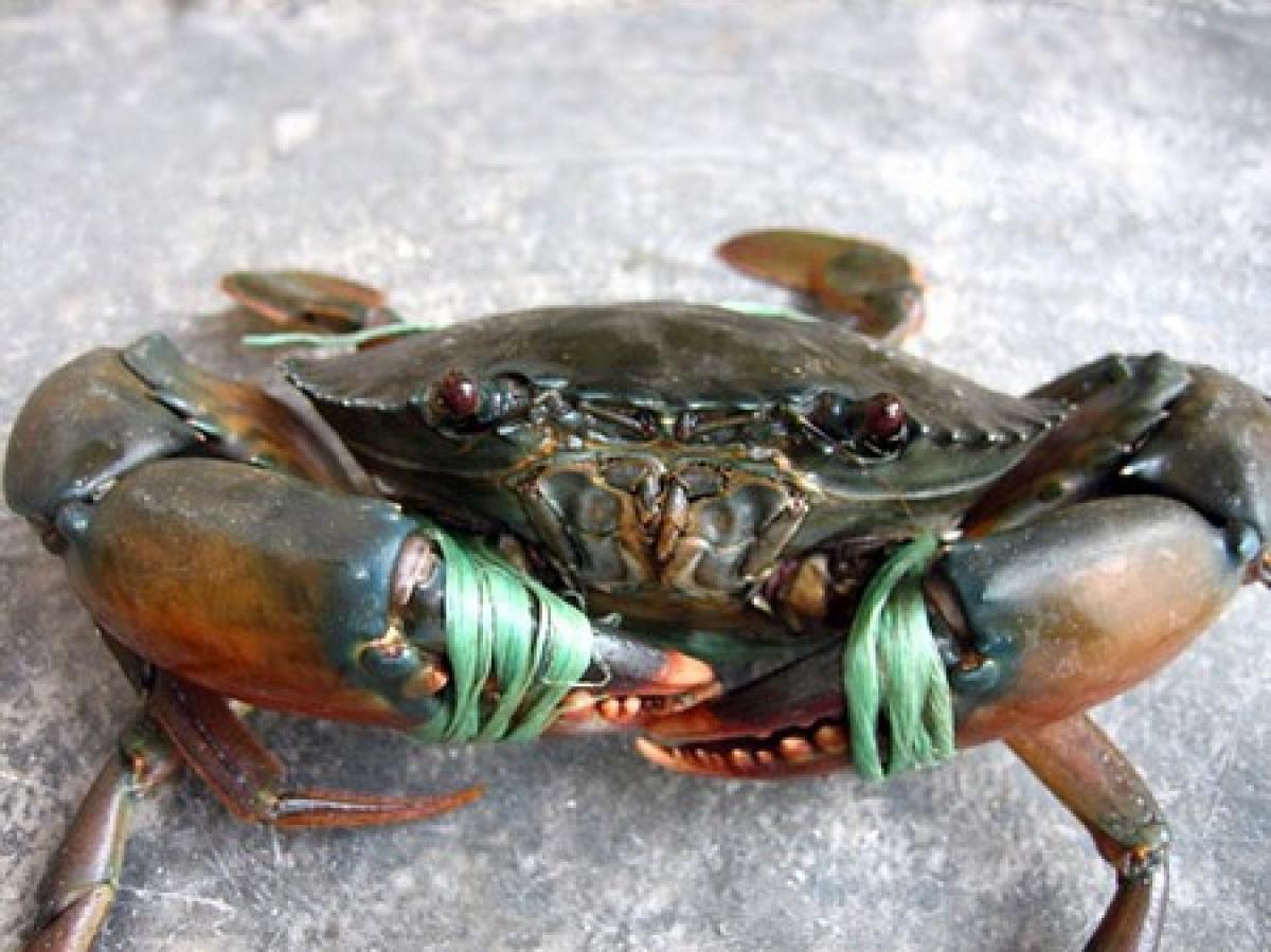 Cách chọn cua biển ngon, chắc thịt không nên bỏ qua