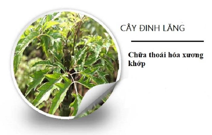 Cach chua benh thoai hoa cot song 6