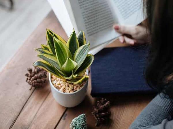 Top cây trồng trong nhà giúp thanh lọc không khí