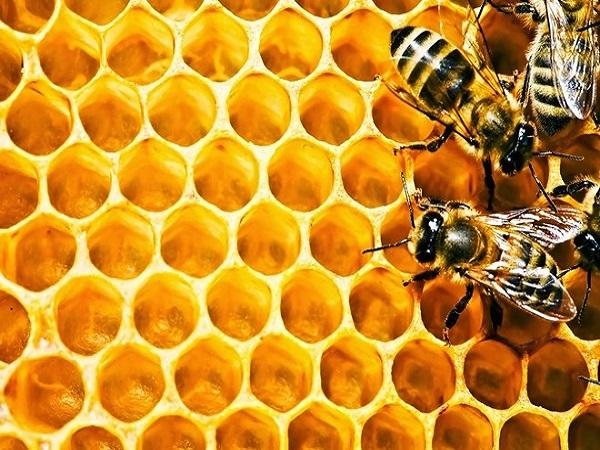 Tác dụng của keo ong đối với sức khỏe và làm đẹp