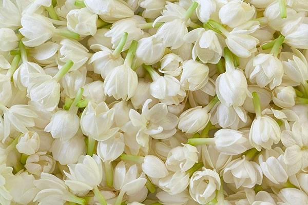 Tinh dau hoa nhai 6