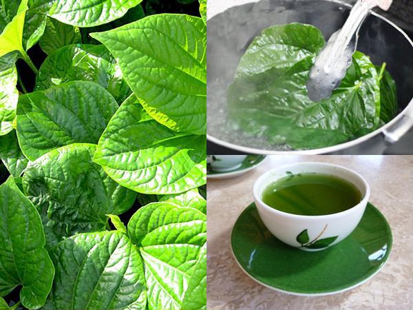 Uống nước lá lốt có tác dụng gì và cách nấu nước lá lốt