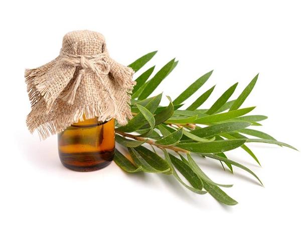 Mua tinh dầu tràm trà ở các cửa hàng chuyên dụng về làm đẹp