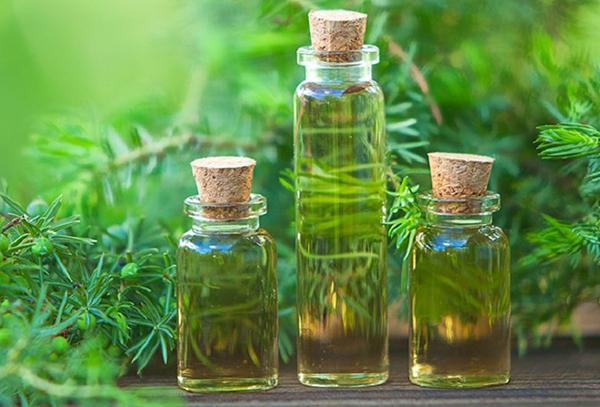 Tinh dầu tràm trà được chiếu xuất từ lá và cành cây dầu tràm