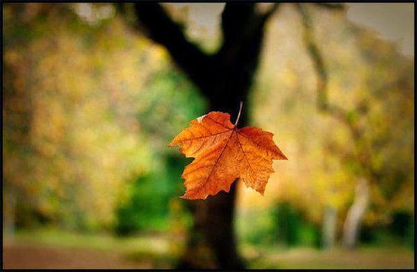 Mơ thấy cây rụng lá tượng trưng cho sự tan vỡ, hủy diệt
