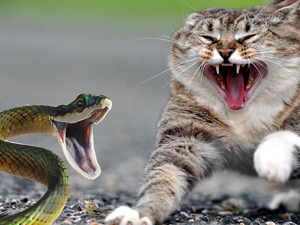 Rắn sợ âm thanh của mèo, chó