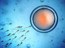 Sau khi bơm tinh trùng kiêng gì để nâng cao tỷ lệ đậu thai