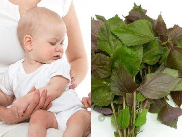 Thực hư về tác dụng của lá tía tô với trẻ sơ sinh giúp hạ sốt khi tiêm phòng