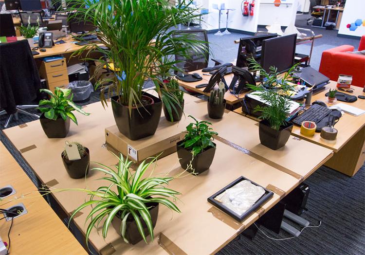 5 loại cây cảnh dễ trồng để bàn làm việc hợp chủ nhân mệnh mộc