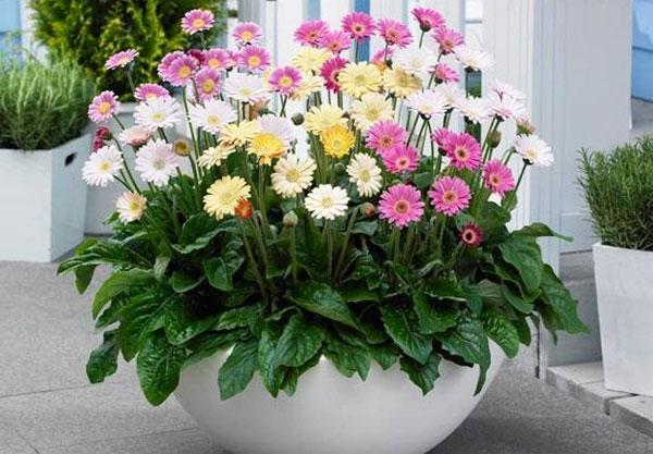 Điểm danh các loài hoa thường nở vào mùa hè đẹp và dễ chăm