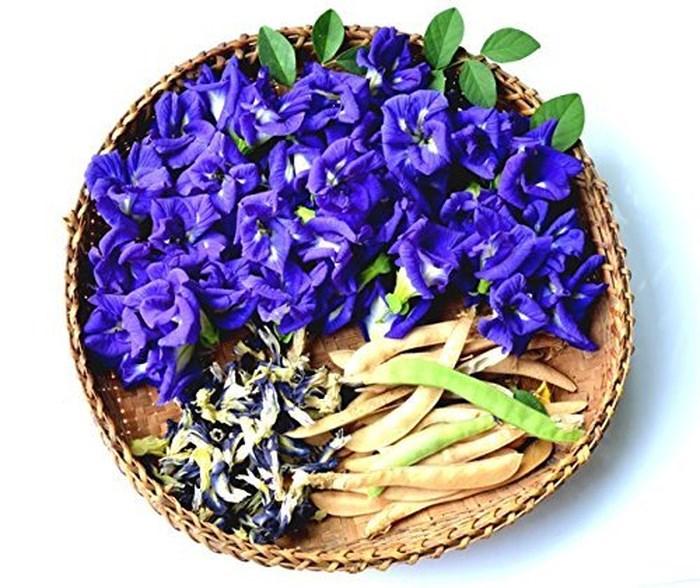 Cây hoa đậu biếc trị được bệnh gì – loại thần dược nhà nào cũng nên có